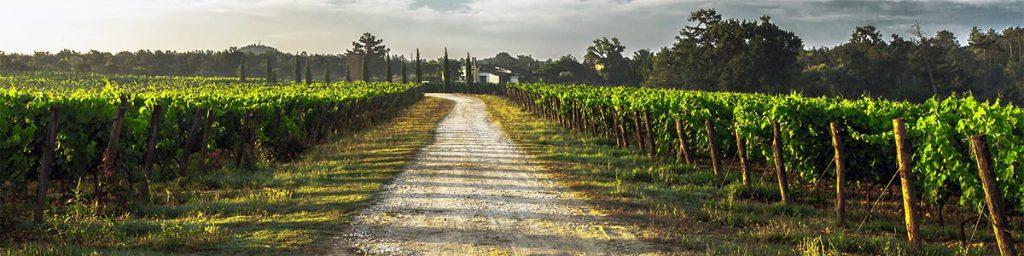 Wijngaard kalkbodem